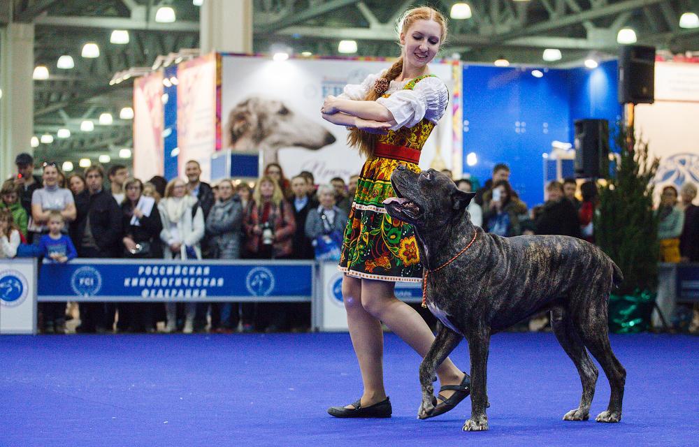 6 марта 2016 саранск выставка собак результаты