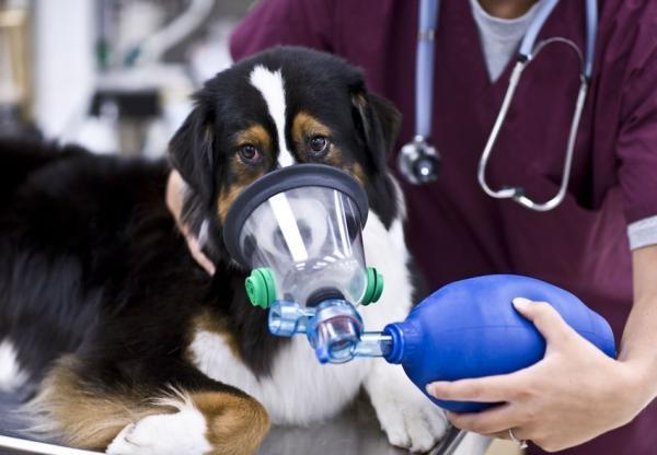 Кислородная маска для животных